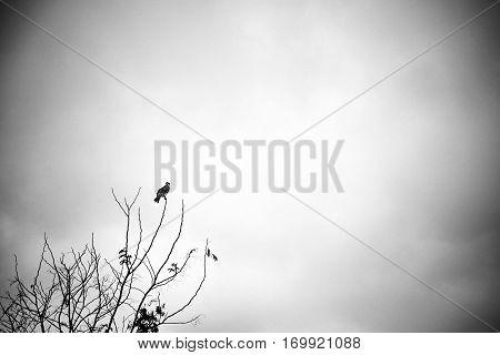 A Big Fowl Resting