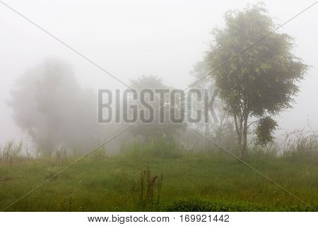 Heavy fog in evergreen jungle forest after rain. Natural misty background. Bali Indonesia.