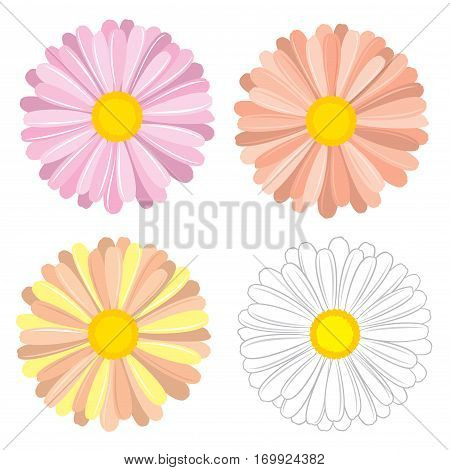 Floral, colorful vector set of chamomile and daisies for design on white background.