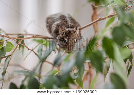 rodent sitting on tree, wild nature background