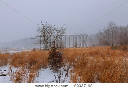 View of a park in winter winter snow blizzard