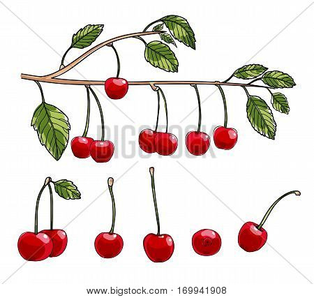 cherry vector set art illustration, single, food, juicy, raw, isolated, ripe, no, natural, berry, delicious, sweet, organic,