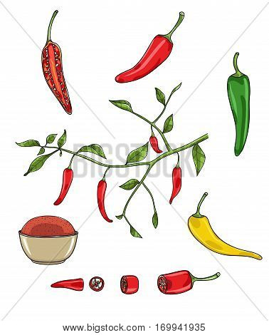 chilli peppers vector set art illustration , set, variation, food, isolated, paprika, spice,