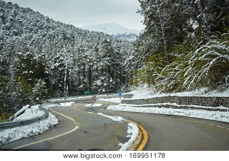 Snowy Forests Way To Bariloche