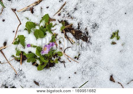 Small Flower In The Snow