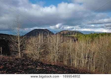 bare woods of betulla aetnensis and old craters of Nuovo and Lepre Mounts in Etna Park, Sicily