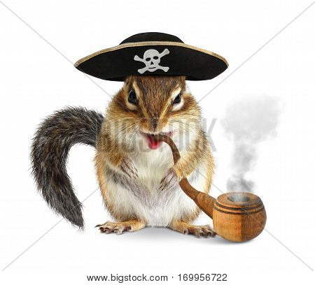 Funny animal pirate chipmunk with pipe and filibuster hat on white.