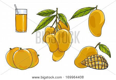 Vector Mango Set Hand Drawn Cute Art Illustration