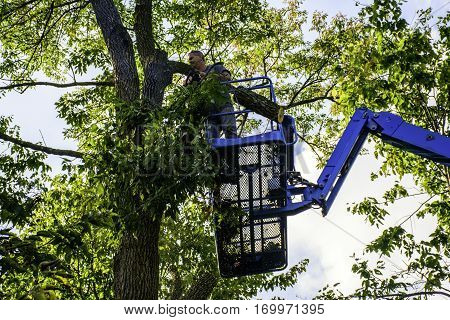 man on aerial platform cutting tree with chainsaw