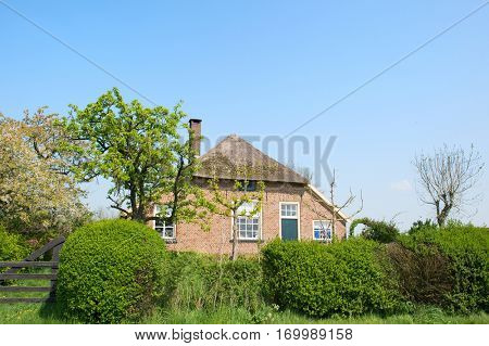 Typical old Dutch farmhouse with straw roof