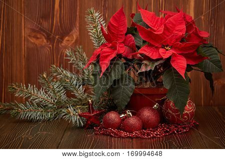 Christmas decoration with Red Poinsettia flowers (Euphorbia Pulcherrima), fir branch, red balls and beads on wooden background.  New year and Christmas background with copy space. Greeting card.