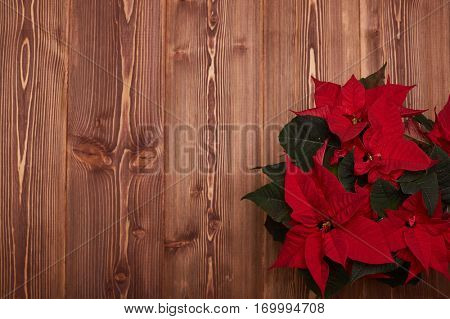 Red Poinsettia flowers (Euphorbia Pulcherrima) on a wooden background. Christmas table decoration. Christmas greeting card with copy space. Top view.