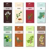 Essential oil labels set. Tea tree, myrrh, juniper, pine , cinnamon, camphor, cedar, cypress, frankincense 8 stripes collection For cosmetics perfume health care products aromatherapy poster