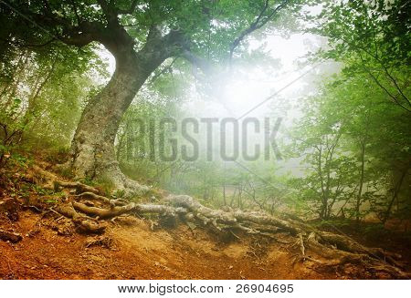 The magic forest in the early morning