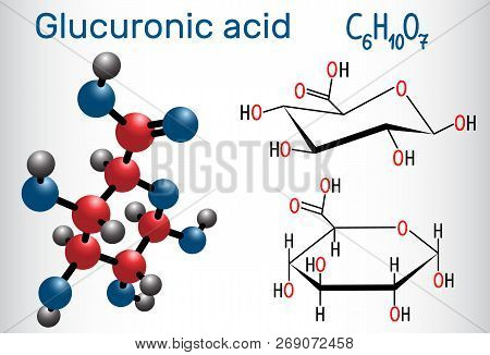 Glucuronic acid molecule, plays an important role in the metabolism of microorganisms, plants and animals. Structural chemical formula and molecule model. Vector illustration poster