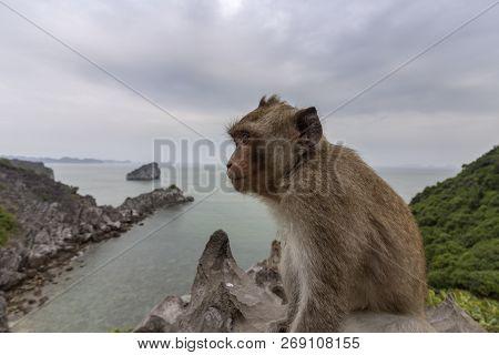 Monkey in mount top of  island beach scenario Lan Ha bay, landmark destination, Cat Ba islands (South of Halong bay), Vietnam. poster