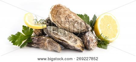 Fresh Raw Oysters And Lemon On White Background.