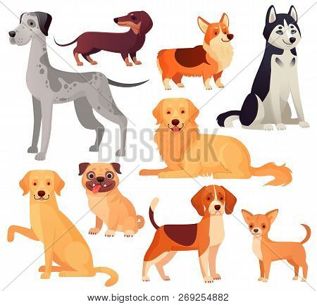 Dogs Pets Character. Labrador Dog, Golden Retriever And Husky. Cartoon Vector Isolated Illustration