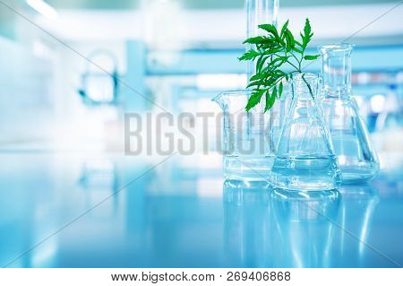 Green Leave In Biotechnology Science Research Laboratory With Flask Beaker Cylinder And Water In Blu