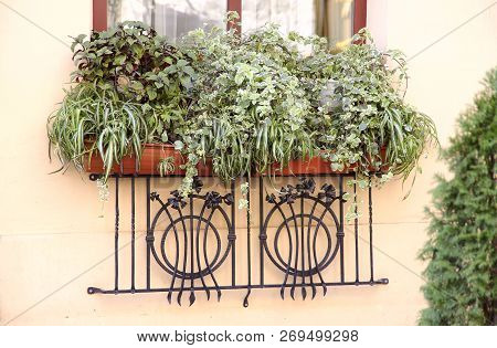 Background. A Beautifully Decorated Window Of A Residential Building With Living Green Plants Outsid