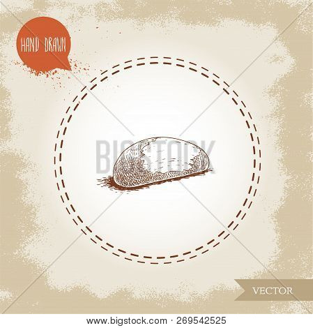 Brazilian Nut. Sketch Style Hand Drawn Vector Illustration. Isolated On Old Background. Healthy And