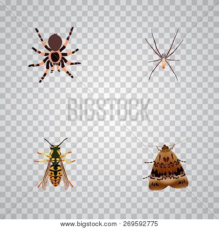 Set Of Insect Realistic Symbols With Arachnid, Sting, Black Widow And Other Icons For Your Web Mobil