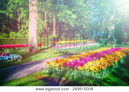 Beautiful Spring Landscape With Multicolor Tulips. Nature Background