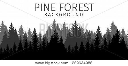 Vector Illustration Cartoon Pine Forest Background. Banner Image A Flat Panorama Silhouette Pine For