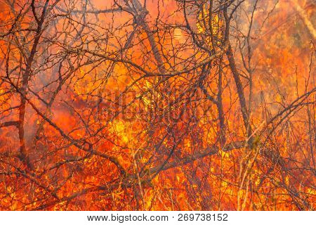 Spice Of Thorns. Bush On Fire Outdoor. Fire Background Conceptual. Dangerous Fire In Dry Season. Str