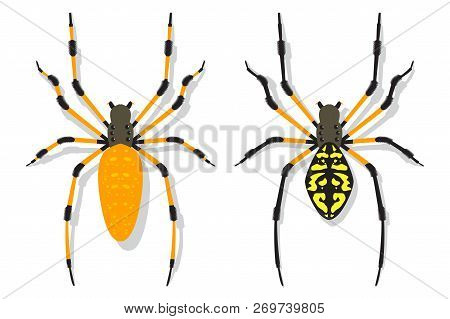 Banana Spider Vector Cartoon Flat Set Isolated On A White Background.
