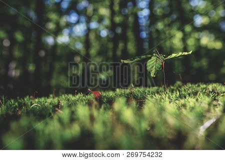 Photo Of Mossy Green Meadow In Autumn Forest With Sunlight