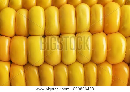 Rows Of Sweet Corn Grains Background. Close Up Of Yellow Succulent Corn Ear. Corncob Texture. Glanci