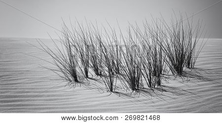 Landscape Of A Sand Dune And Grass With Wind Pattern Artistic Conversion