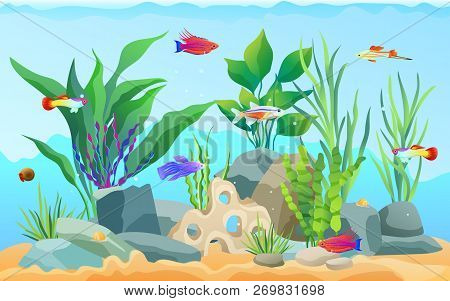 Hand Drawn Aquarium With Fish And Seaweed. Goldfish And Neon Tetra, Green Tiger Barb And Blue Stripe