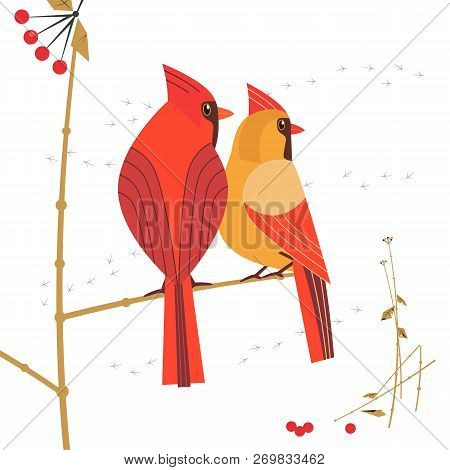 Birdwatching icon. Red Northern cardinal couple comic flat cartoon. Winter birds of backyard, city garden. Minimal simple stylized bird design. Wildlife scavenger hunt banner sign. Vector illustration poster