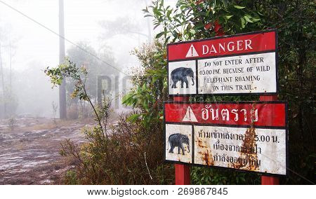 warning elephant danger / red sign set on walkway in the forest warning beware of elephant Wildlife danger poster