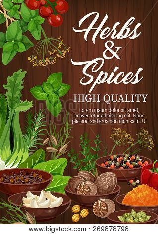 Herbs And Spices, Culinary Ingredients And Cooking Herbal Spicy Seasonings. Vector Garlic, Basil Or