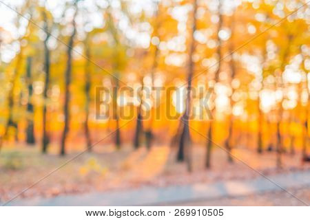 Beautiful Autumnal Natural Bokeh With Sun For Background Or Backdrop