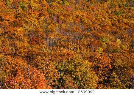 Brilliant Autumn Landscape In New England