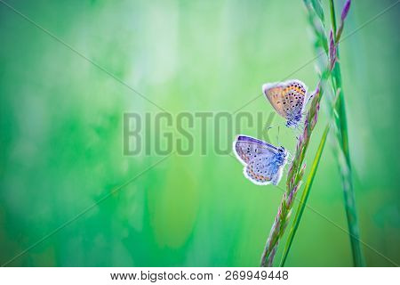 Nature Butterfly Background Concept And Beautiful Summer Meadow Background. Inspirational Nature Clo