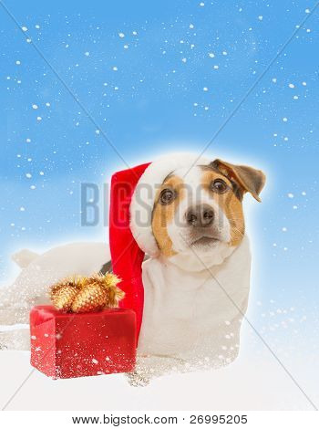 postcard with funny dog as santa, gift,