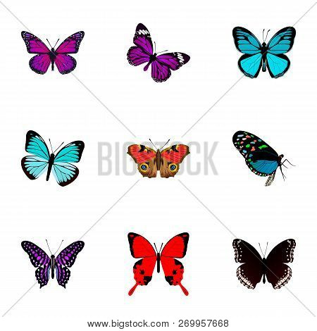 Set Of Butterfly Realistic Symbols With Demophoon, Striped Purple Crow, Precis Almana And Other Icon