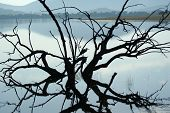 Egret in dead tree branches silhouette against placid lake poster