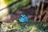 Bird, small cute bird with blue feathers sitting on stone on sunny summer day on blurred natural background. Wildlife and nature. Ornithology poster