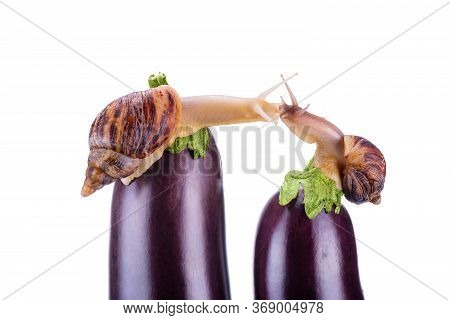 Snails Are Kissing.snails And Eggplant On A White Background. Concept Of Delicious And Healthy Food.