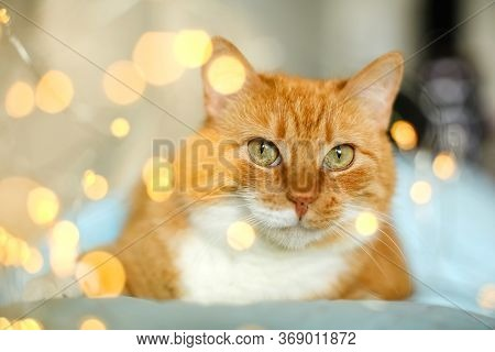 Close-up Of The Cat's Face.the Red Cat Looks At The Camera With Green Eyes. Yellow Round Bokeh.chris