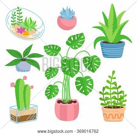 House Plant Potted Ceramic Set, Flat Cartoon Style. Succulents And House Plants, Cactus Collection.