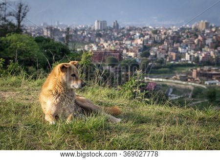 A Dog On A Hill With A City In The Background