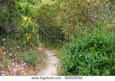 Trail Through The Wildflowers, Rolling Hills, And Redwoods In The Big Sur, California Forest