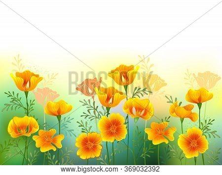 Artistically Drawn Glade Of Orange, California Poppies On White Background. Wildflowers.